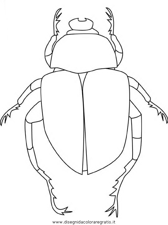 animali/insetti/scarab-beetle.JPG