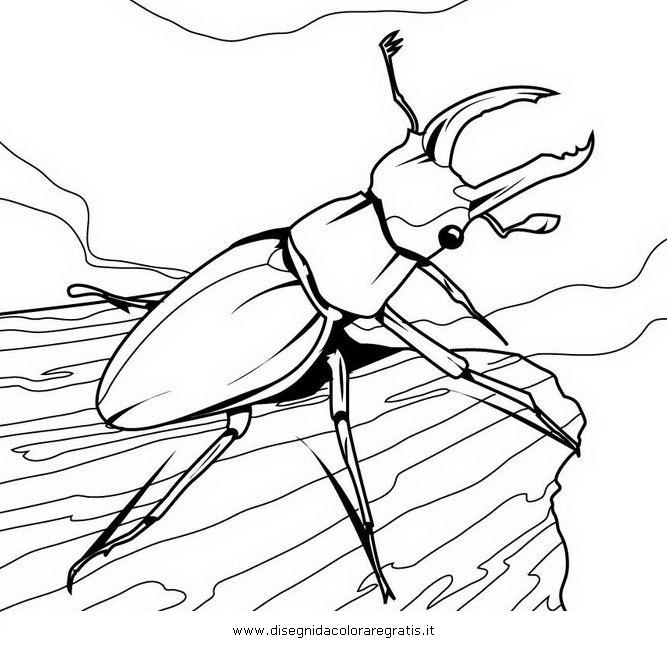 animali/insetti/scarafaggio_maggiolino.JPG
