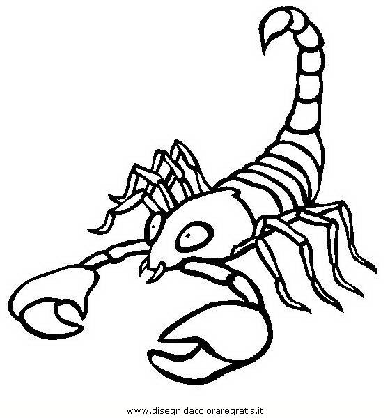 animali/insetti/scorpione_03.JPG