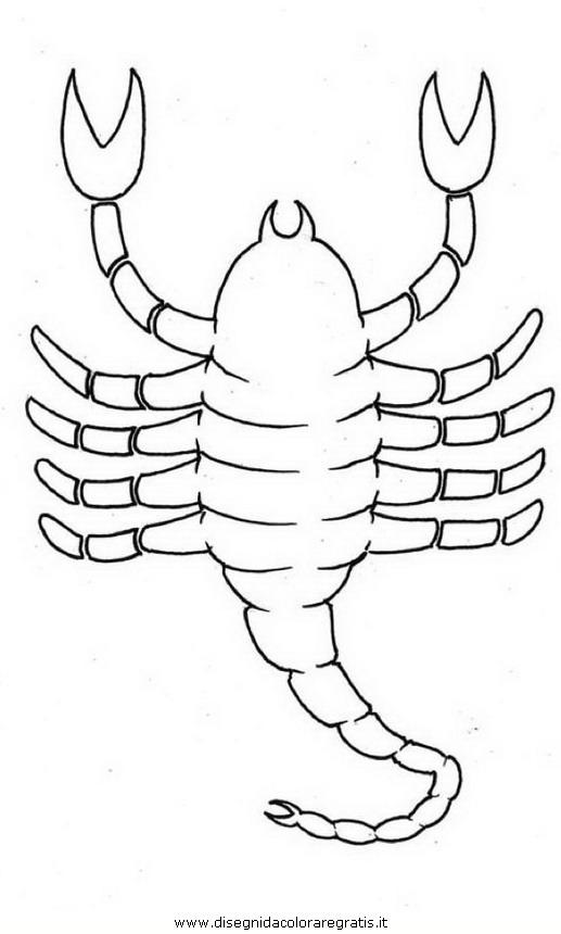 animali/insetti/scorpione_04.JPG