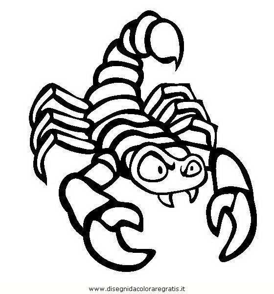animali/insetti/scorpione_05.JPG