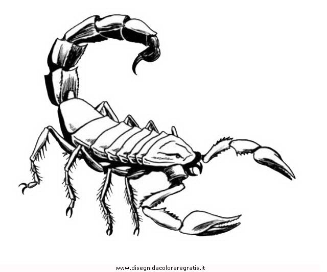 disegno scorpione 5 animali da colorare
