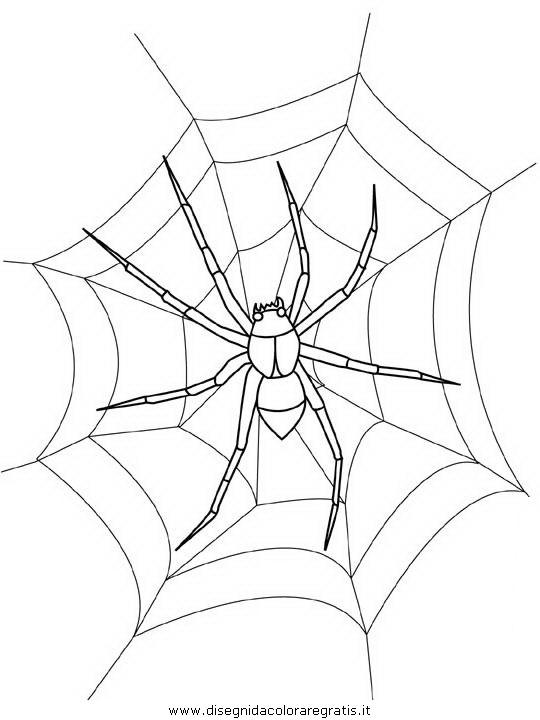 animali/insetti/spider.JPG