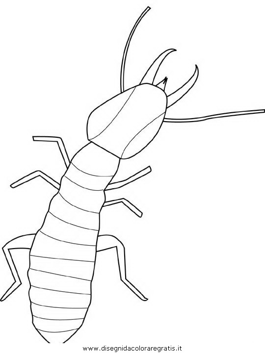 animali/insetti/termite.JPG