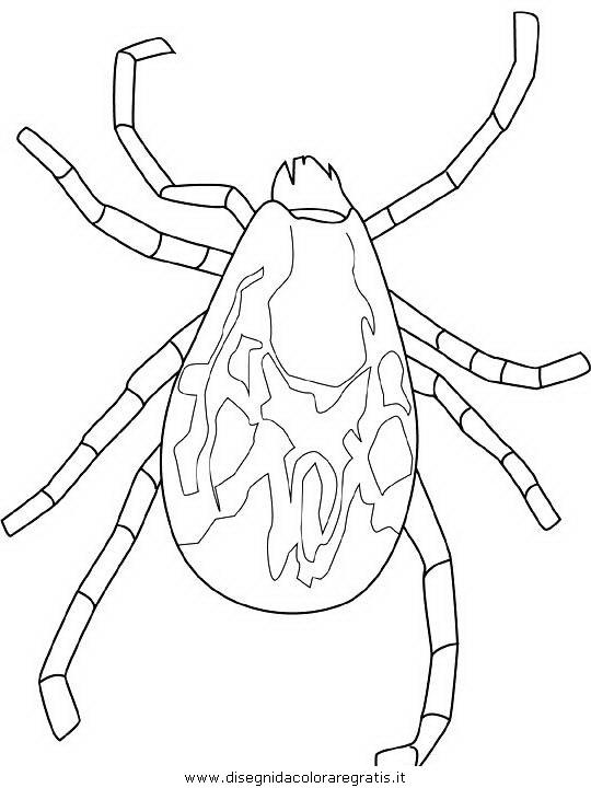animali/insetti/tick.JPG