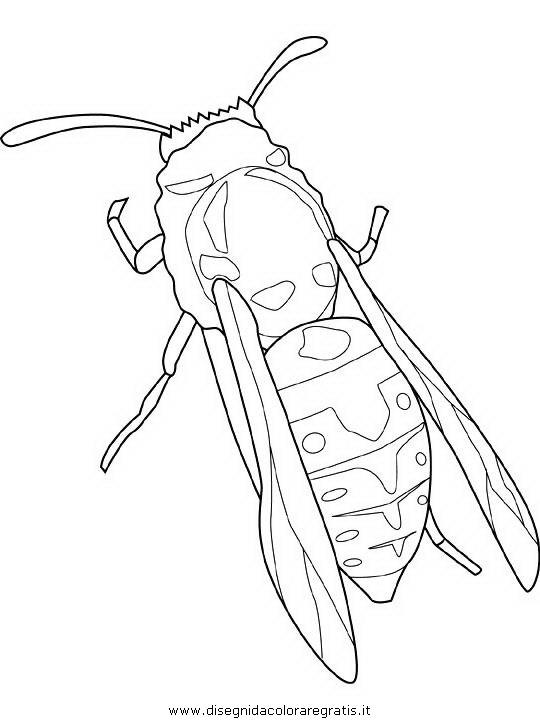 animali/insetti/yellow-jacket.JPG