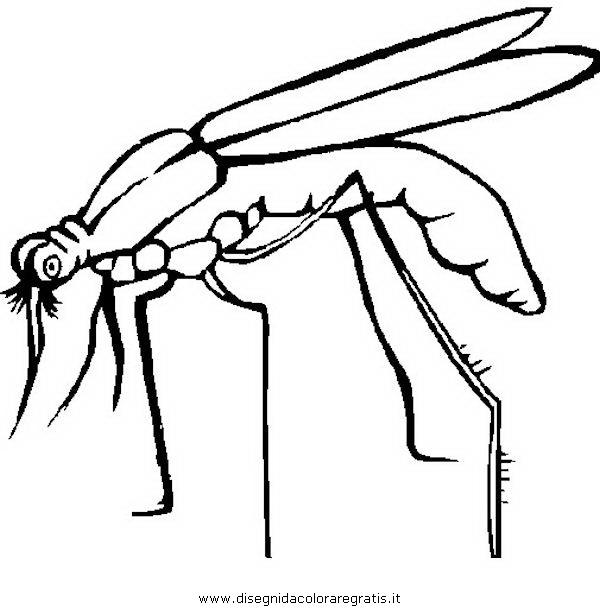 animali/insetti/zanzara_5.JPG