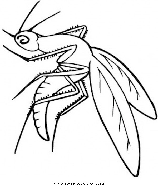 animali/insetti/zanzara_7.JPG