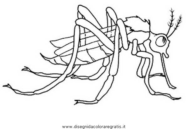 animali/insetti/zanzara_9.JPG