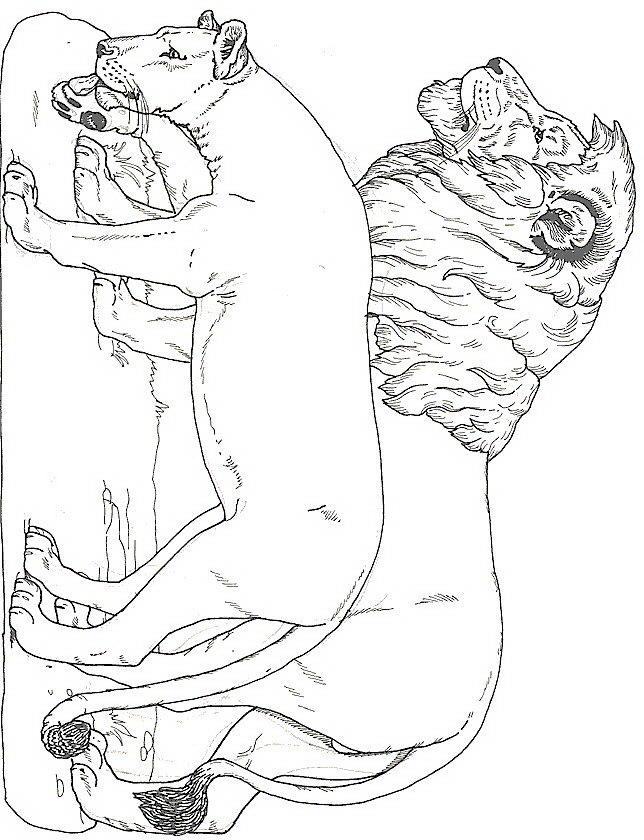 animali/leoni/leone_a1.jpg