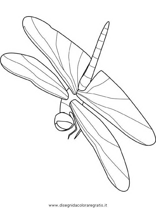 animali/libellule/dragonfly.JPG