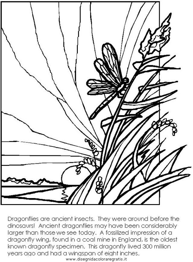animali/libellule/libellula1.JPG