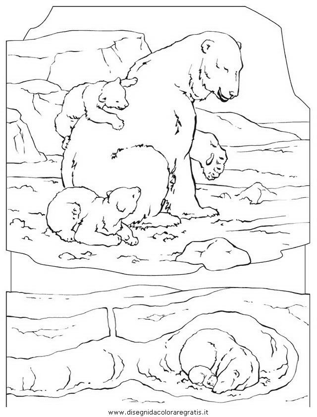 animali/orsi/orso_002.JPG