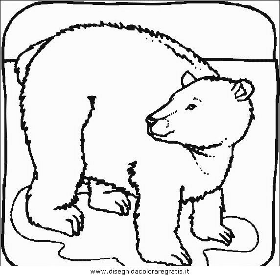 animali/orsi/orso_043.JPG