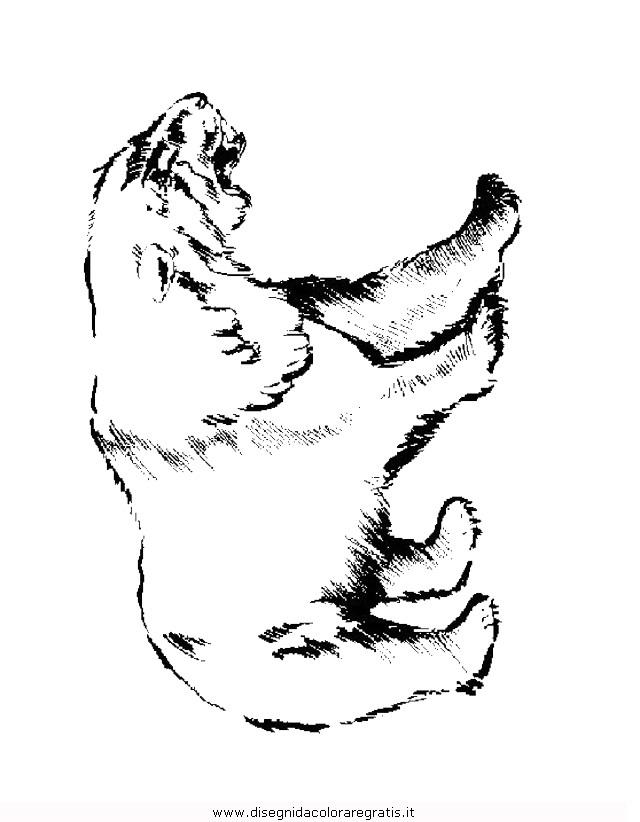 animali/orsi/orso_082.JPG