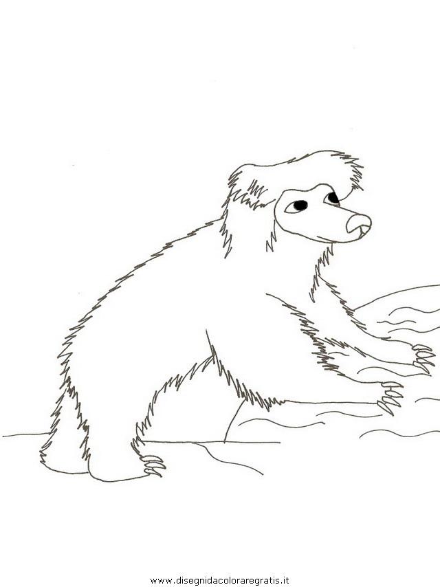 animali/orsi/orso_101.JPG