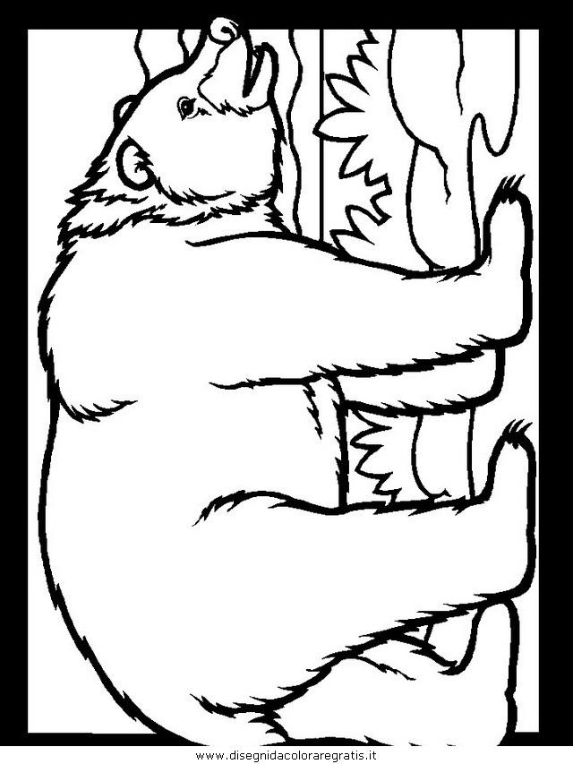 animali/orsi/orso_108.JPG