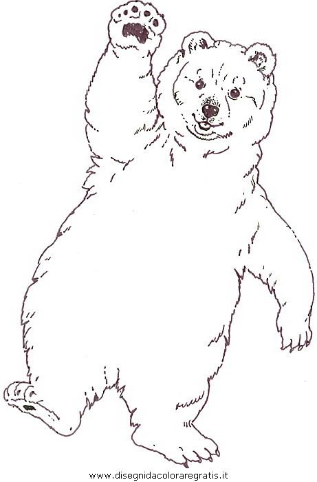 Disegno orso orsi 18 animali da colorare - Immagini di orsi da colorare in ...