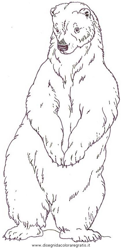 Disegno orso orsi 19 animali da colorare - Orsi polari pagine da colorare ...