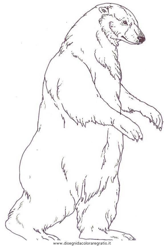 animali/orsi/orso_orsi_20.jpg
