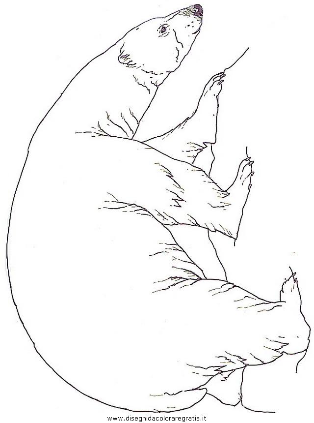 animali/orsi/orso_orsi_21.jpg