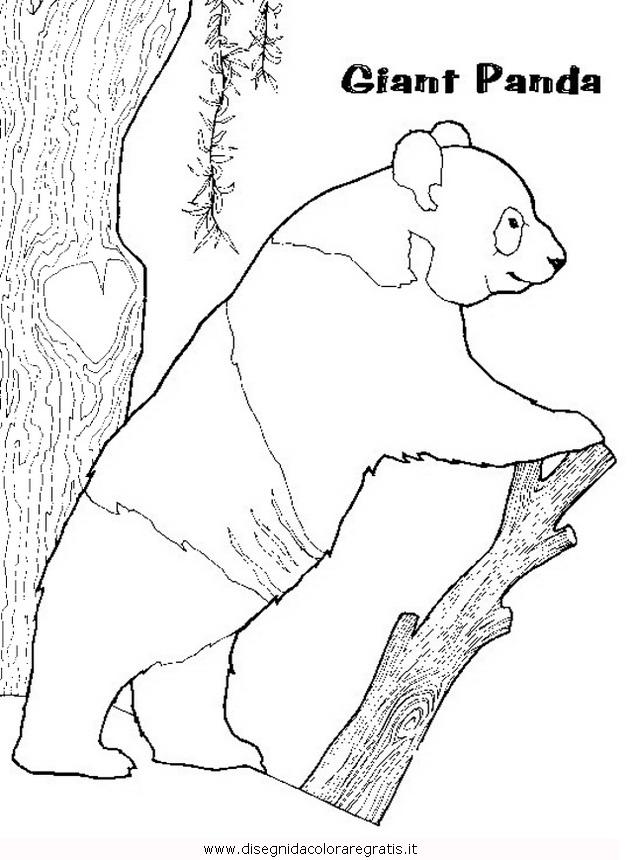 animali/orsi/panda_33.JPG