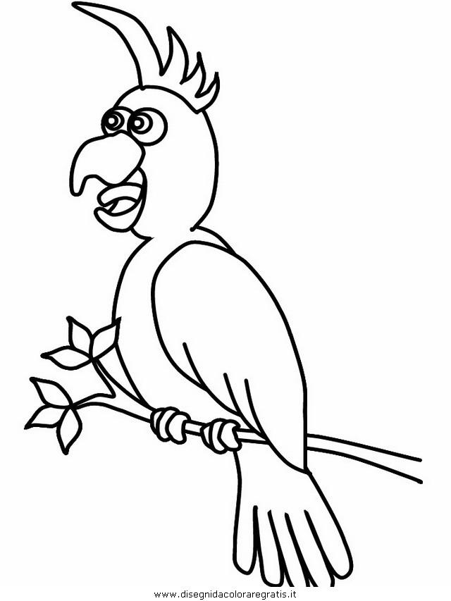 animali/pappagalli/pappagallo01.JPG