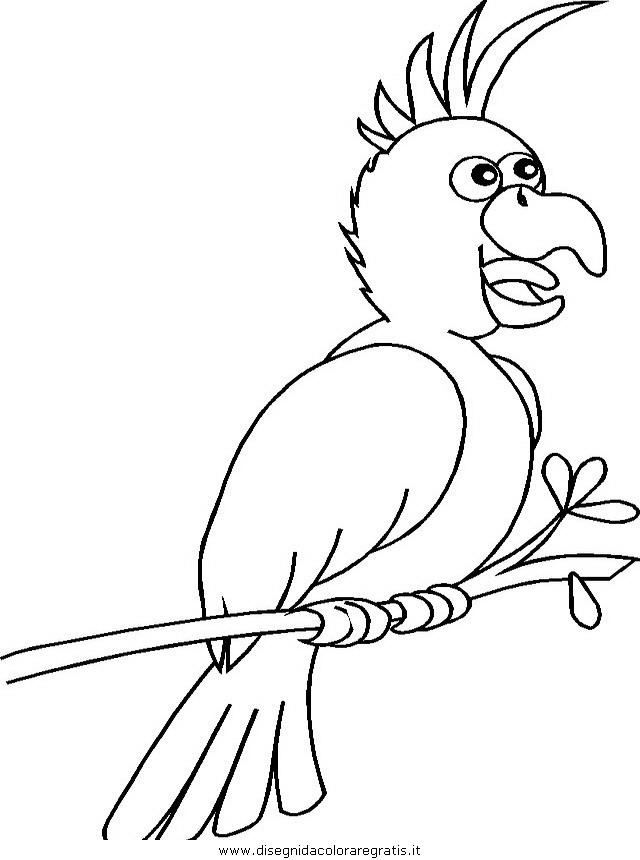 animali/pappagalli/pappagallo03.JPG