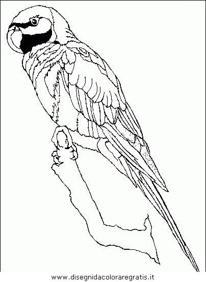 Disegno pappagallo04 animali da colorare - Immagini di orsi da colorare in ...