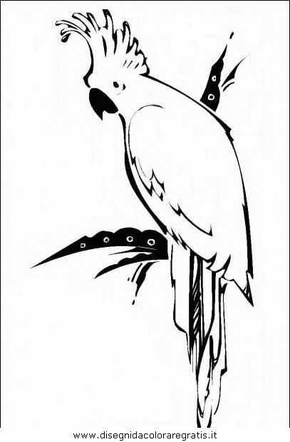 animali/pappagalli/pappagallo07.JPG