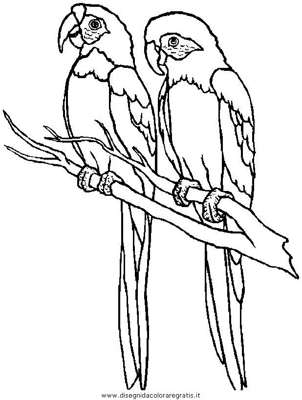 animali/pappagalli/pappagallo10.JPG