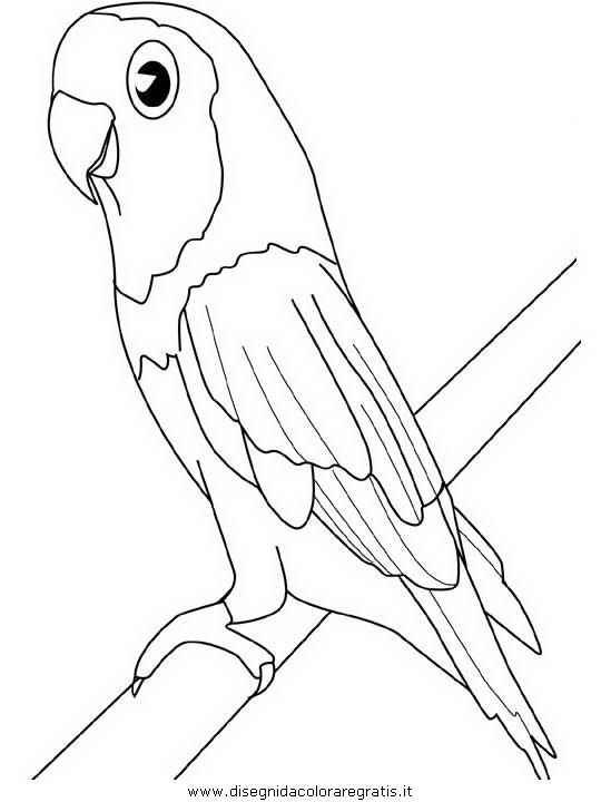 Disegno pappagallo12 animali da colorare for Immagini da copiare facili