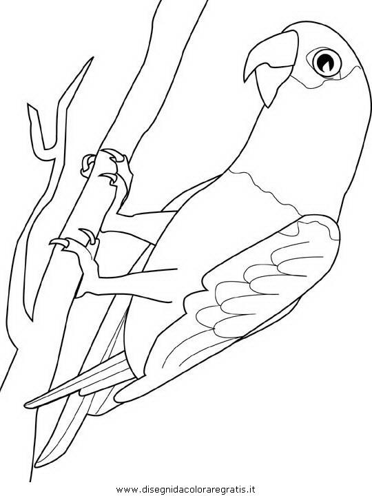 animali/pappagalli/pappagallo13.JPG