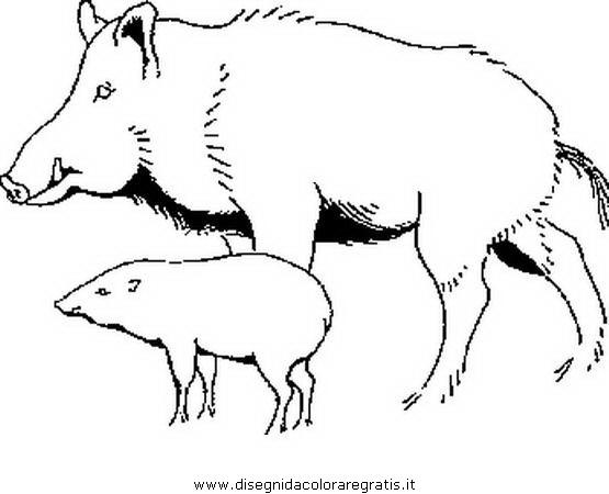 animali/pecore/cinghiale.JPG