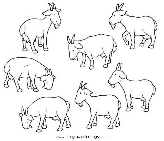 animali/pecore/heidi_caprette.JPG