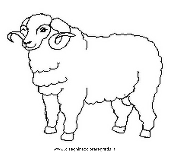 animali/pecore/montone.JPG