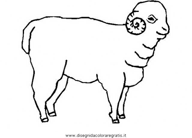 animali/pecore/montone_2.JPG