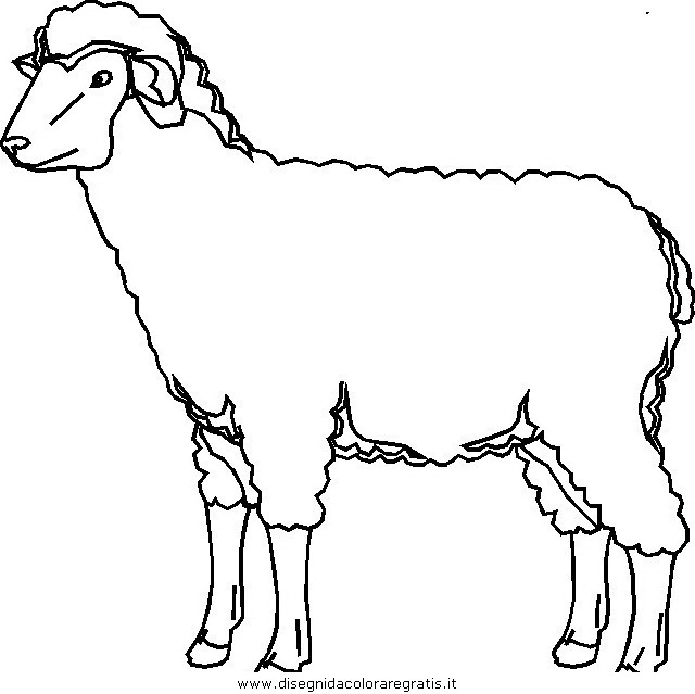 animali/pecore/pecora_4.JPG