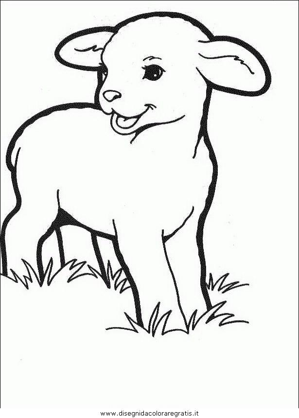Disegno pecora animali da colorare