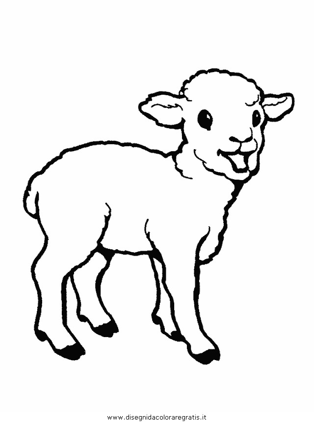 animali/pecore/pecora_pecore02.JPG