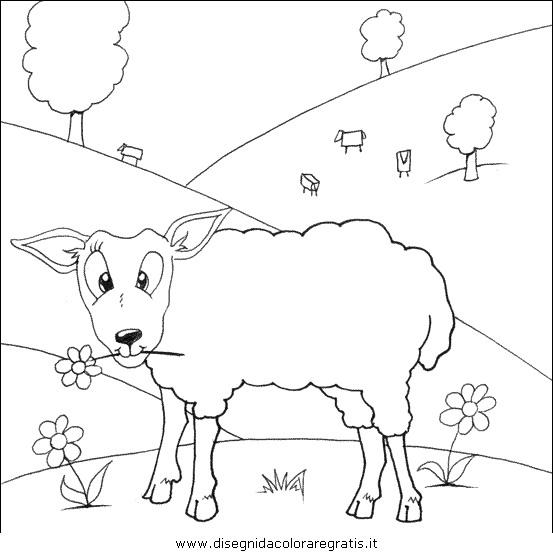animali/pecore/pecora_pecore08.JPG