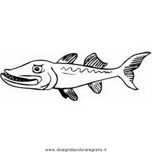 animali/pesci2/barracuda_01.JPG