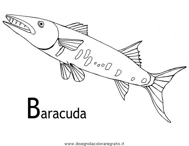 animali/pesci2/barracuda_03.JPG