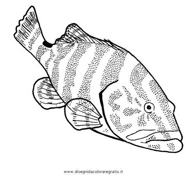 animali/pesci2/cernia.JPG