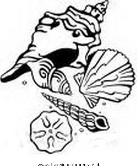 animali/pesci2/conchiglia_4.JPG