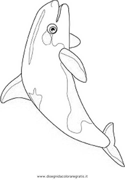 animali/pesci2/orca.JPG