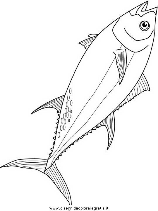 animali/pesci2/pesce_pesci_008.JPG