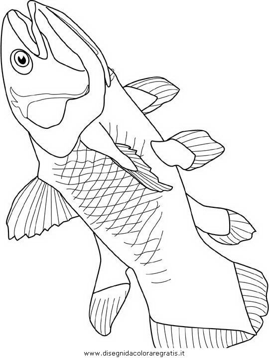 animali/pesci2/pesce_pesci_012.JPG