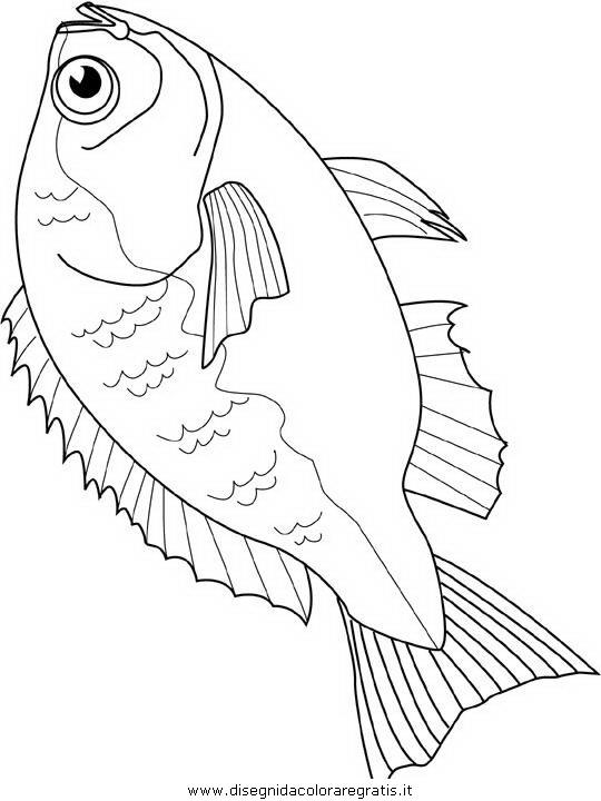 animali/pesci2/pesce_pesci_018.JPG