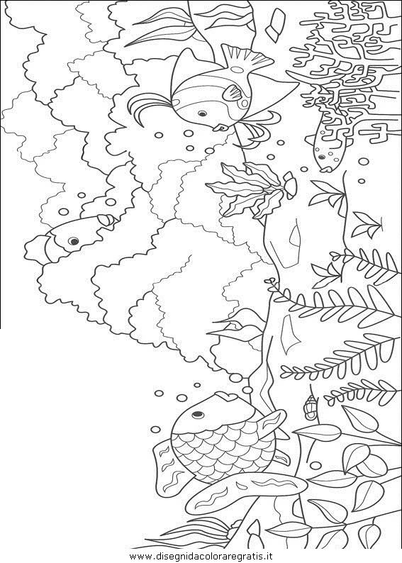 animali/pesci2/pesce_pesci_021.JPG